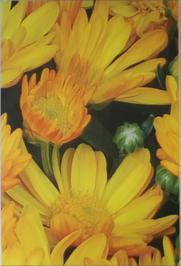 Jean Knox Image 1 artwork