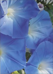 Jean Know Art Blue Flowers Image 2
