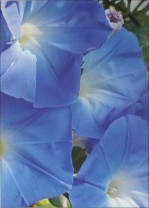 Jean Know Art Blue Flowers Image 2