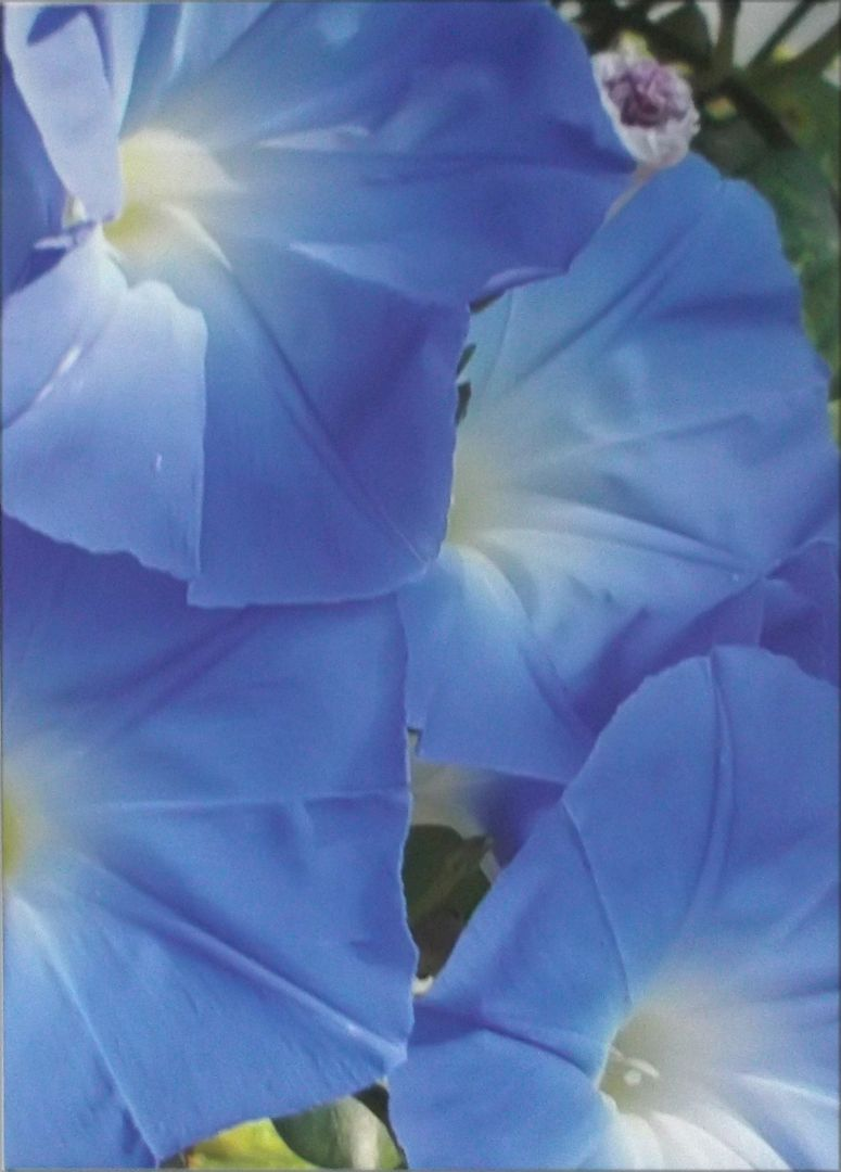 Jean Knox Blue Lillies artwork