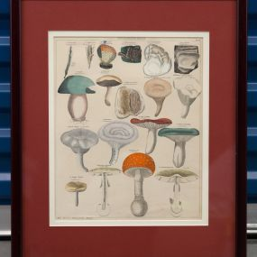 Antique Botanical Mushroom Print artwork